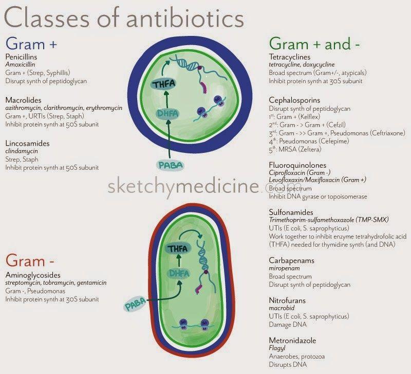 class+of+antibiotics.jpg (800×729) Nurse, Pharmacology