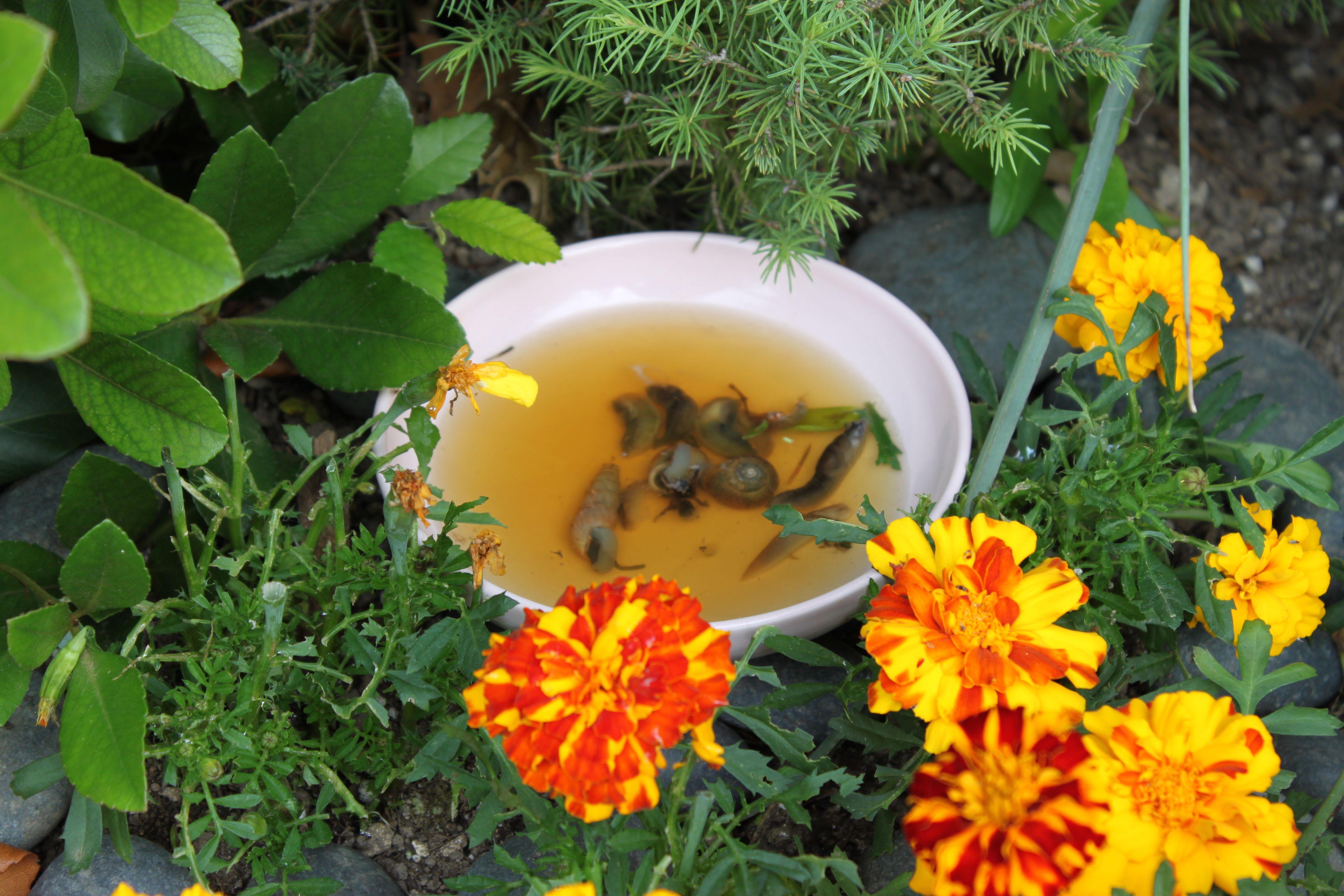 Did ya know compost mulch front flower beds garden