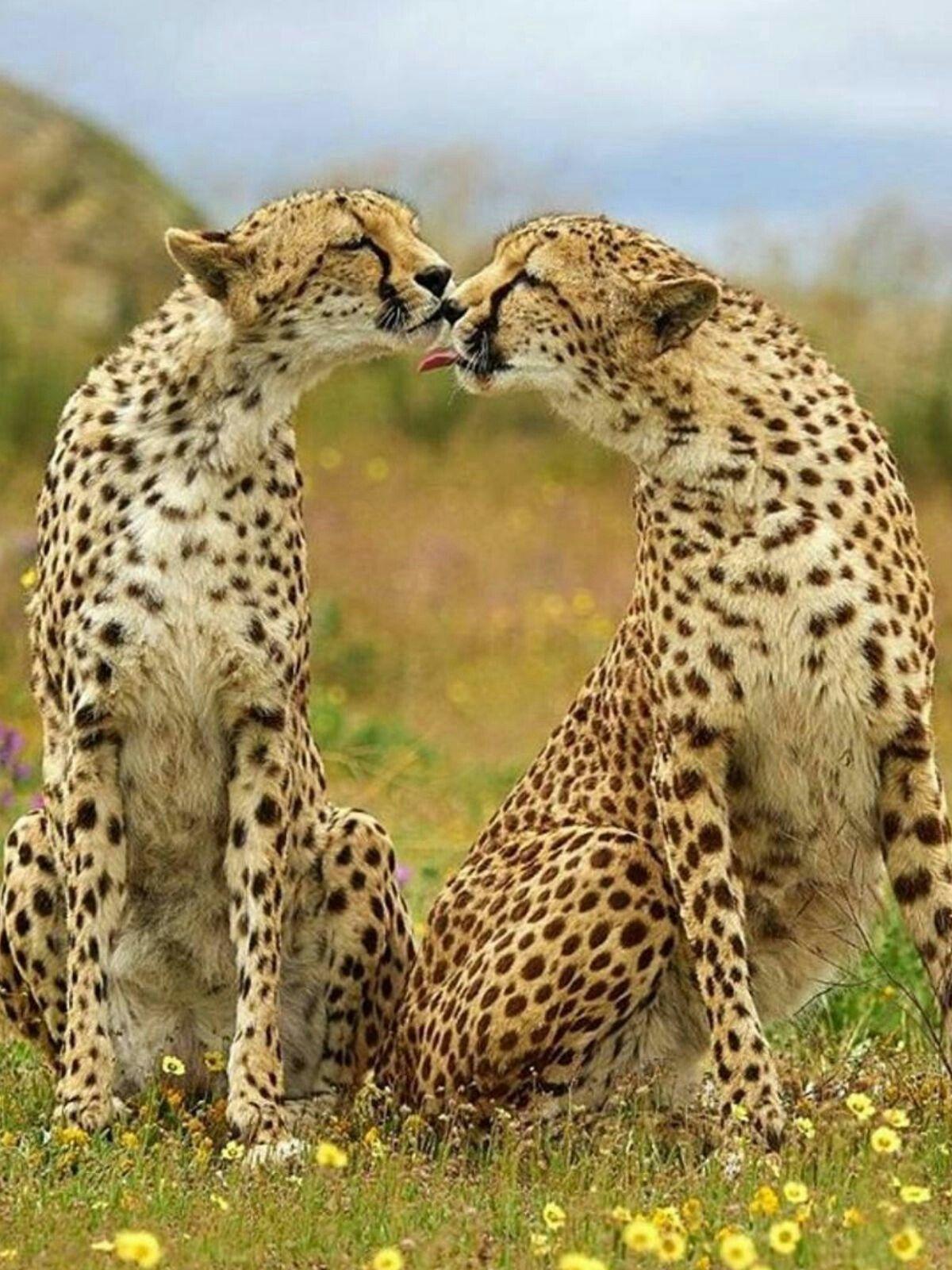 Fantastische Tierwelten