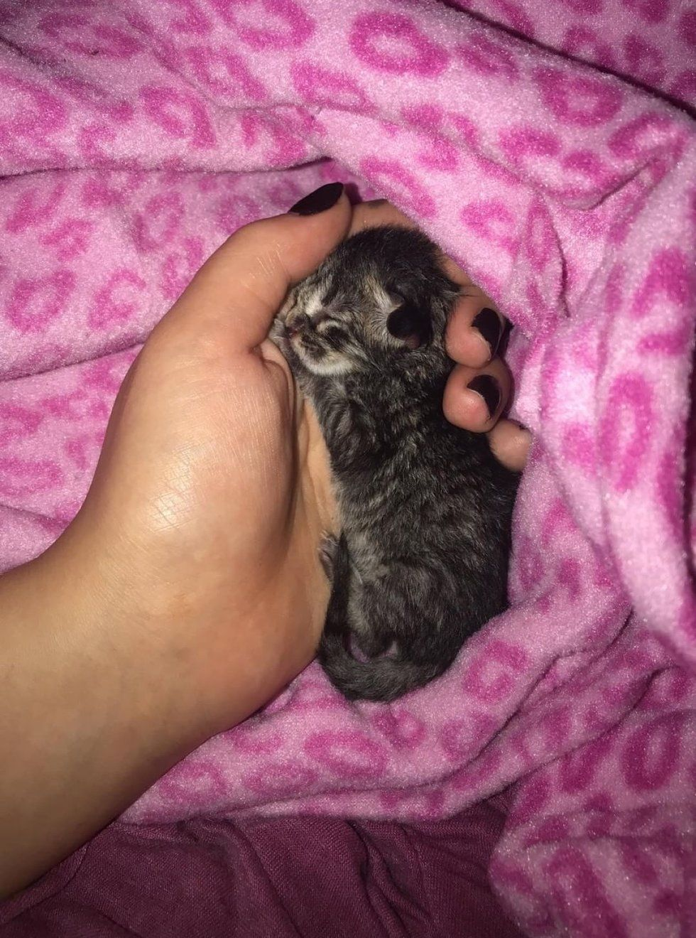 Kitten Who Was Abandoned In Parking Lot Finds New Mom And Won T Let Go Love Meow Kitten Animal Stories Cute Animals