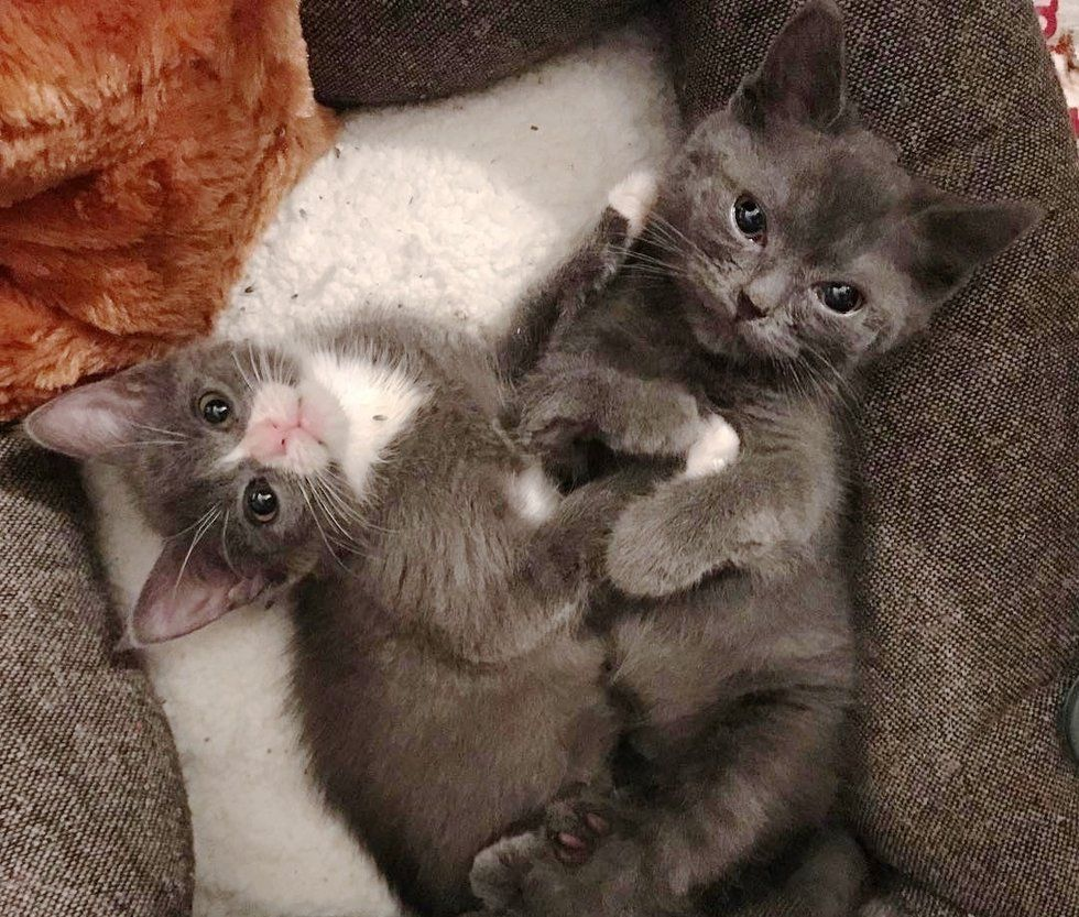 A Kitten With Twisted Legs Met Another Kitten Who Was Also Born Special She Immediately Took To Her And Started Cuddling The Crazy Cats Cat Sanctuary Kitten