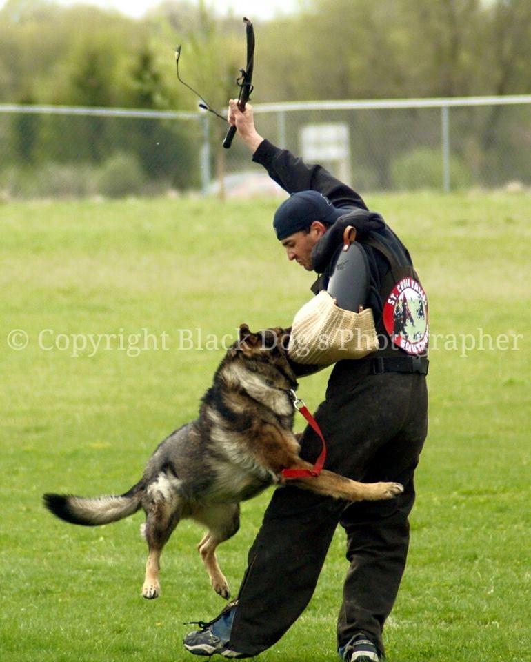Schutzhund Ipo Dog Sport Photography Www Blackdogsphoto Com