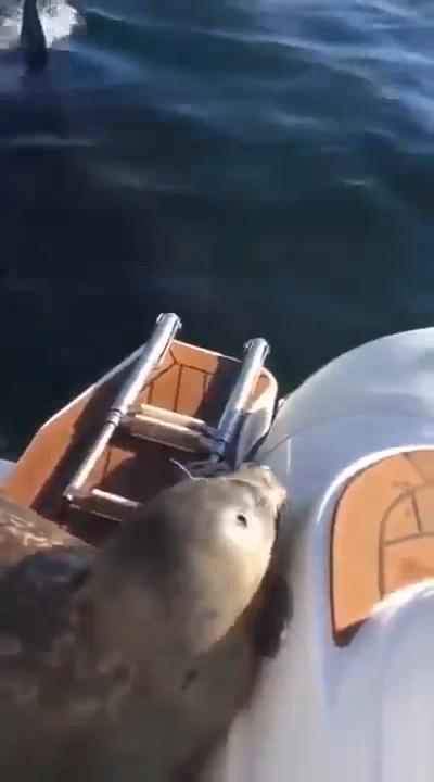 Help me... | Seal in danger