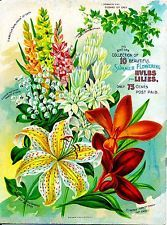 Summer Bulbs Lilies Vintage Flowers Seed Packet Catalogue Advertisement Poster