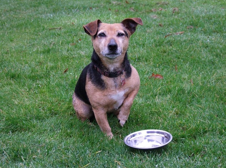 3 Types Of Dog Food You Should Know Dogfood Food Aggression In