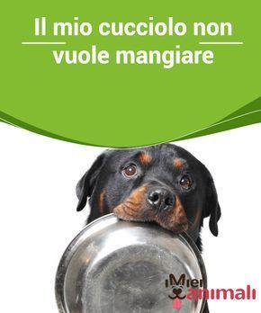 Il Mio Cucciolo Non Vuole Mangiare Cani Cuccioli Animali E Cani