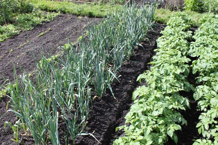 Succession Planting How To Get The Most From Your Garden This Year Organic Vegetable Garden Planting Vegetables Garden Pests