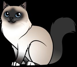 Birman Baby Animal Drawings Cat Art Cats Illustration