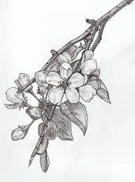 Orange Blossom Botanical Illustration Google Search Blossom Tattoo Jasmine Flower Tattoos Apple Blossom Tattoos