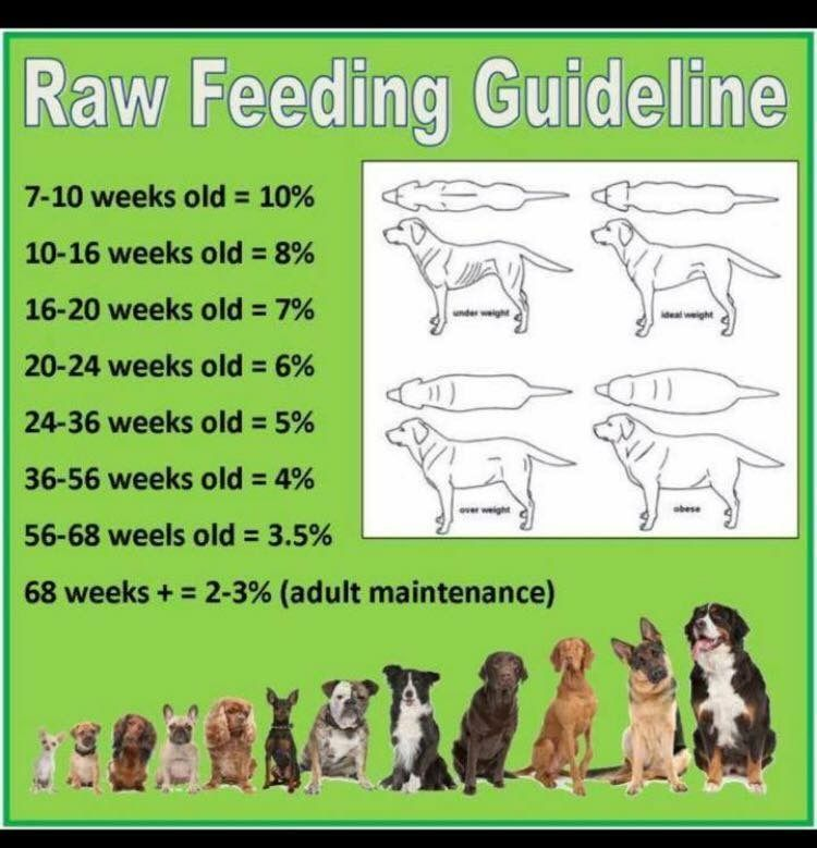 Raw Feeding Guidelines Raw Feeding For Dogs Raw Pet Food Dog