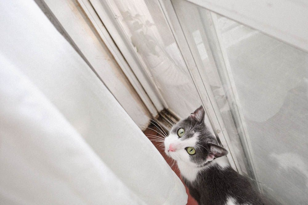 A cat named Pippa!