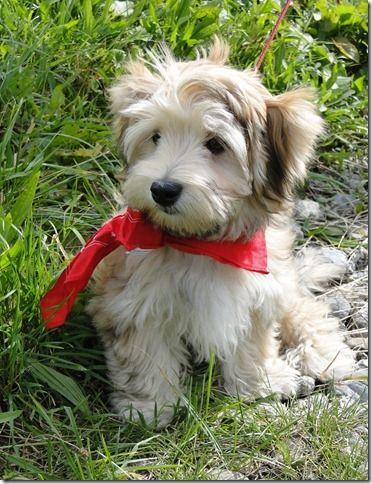 Timi ist der Liebling aller Menschen Собачки