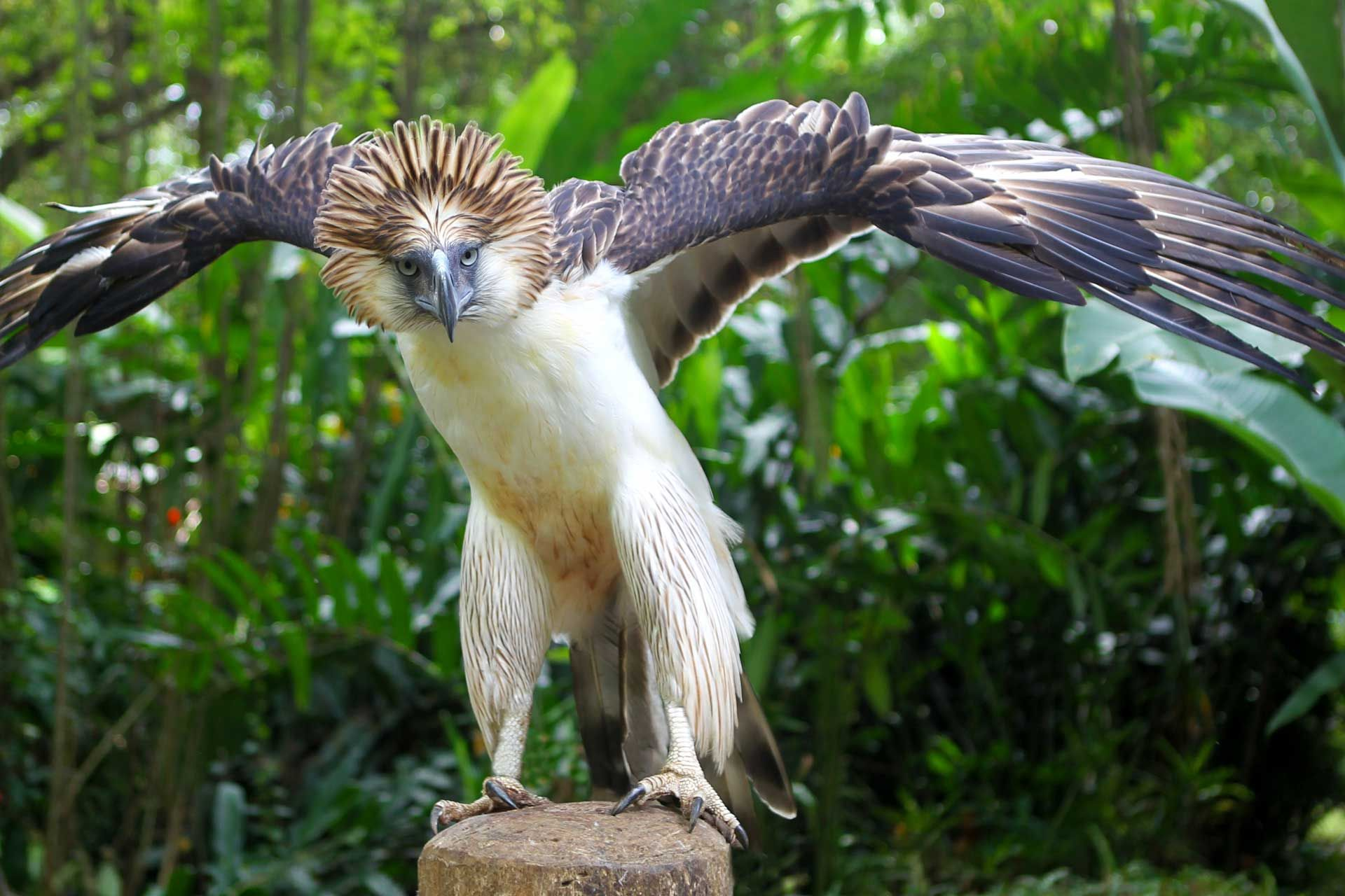 Some Details About Largest Eagles In The World (With