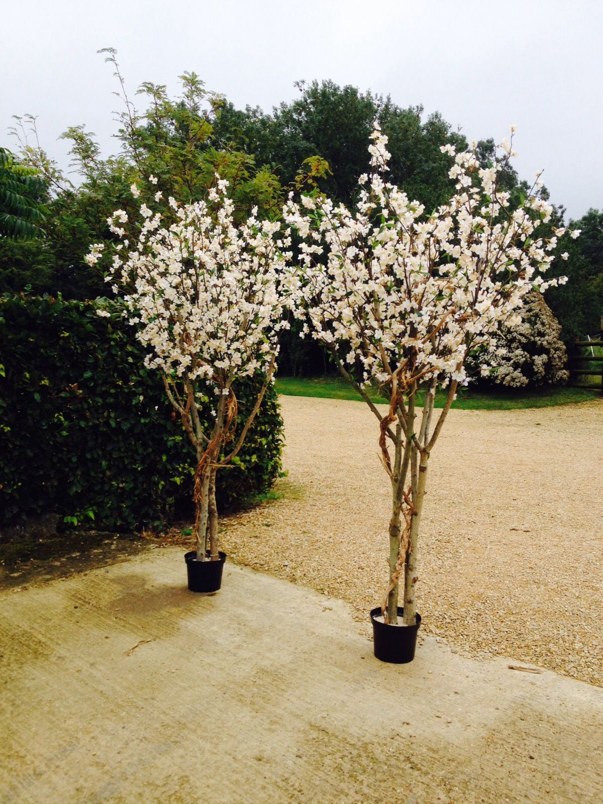 Artificial 7ft White Blossom Trees From Red Hot Plants Made Using Real Wood Trunks And Artificial Cherry Blossom Tree White Blossom Tree White Cherry Blossom