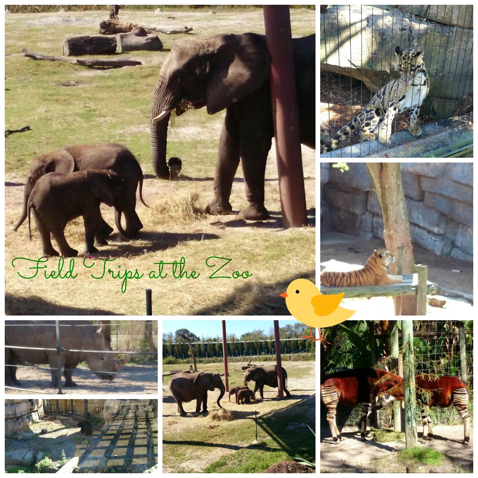 Field Trips At The Zoo With Pre K