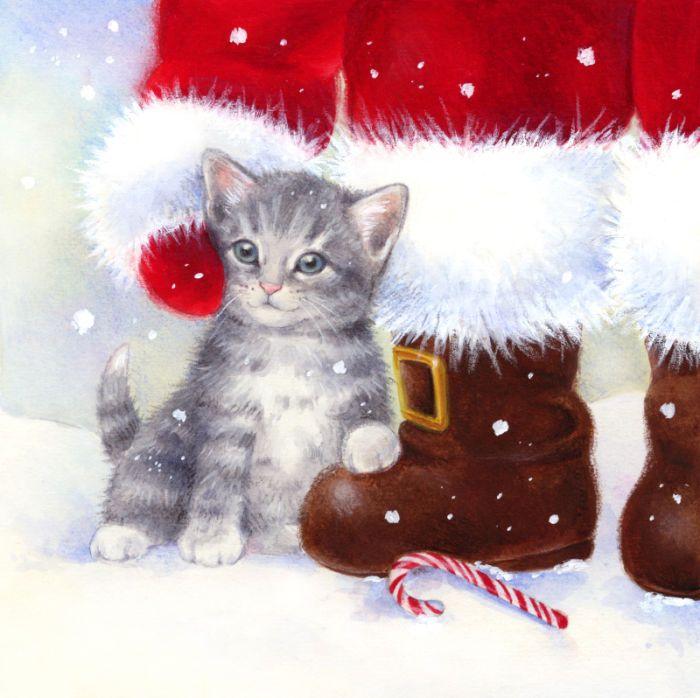 Lisa Alderson - LA - TSUP kitten.jpg
