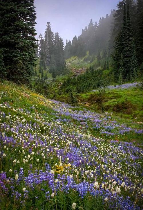 Photo of Misty Valley near Mount Ranier Washington State. #meadowgarden #meadow #garden