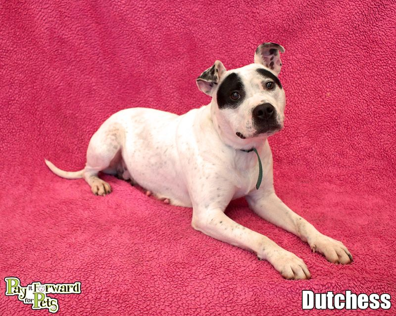 Adopt Dutchess On Petfinder Pet Adoption Adoption Homeless Pets