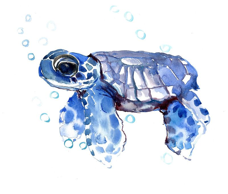 Sea Turtle Cute Turtle Blue Turtle Art Print Sea Turtle Art