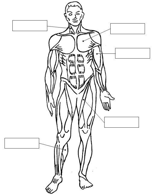 Cuentos De Don Coco Ficha Del Sistema Muscular Para Colorear Y