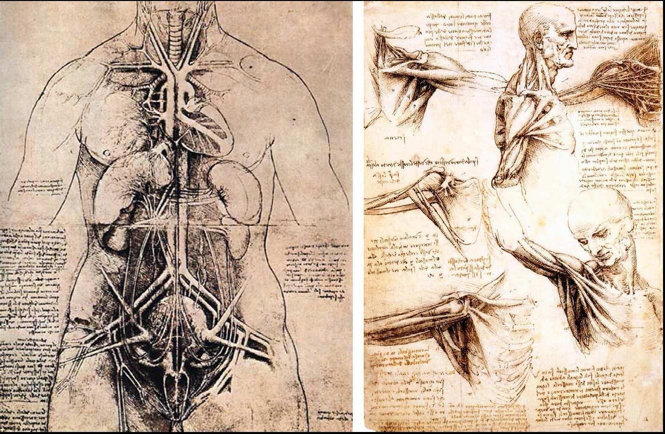 anatomía | Draws | Pinterest | Anatomía, Figuras humanas y Fuentes