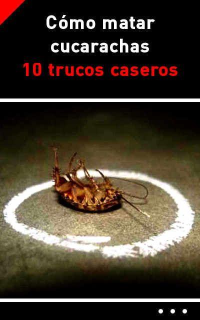 Como Acabar Con La Plaga De Cucarachas Chiquitas Como Matar Cucarachas 10 Trucos Caseros Matar Bichos Matar