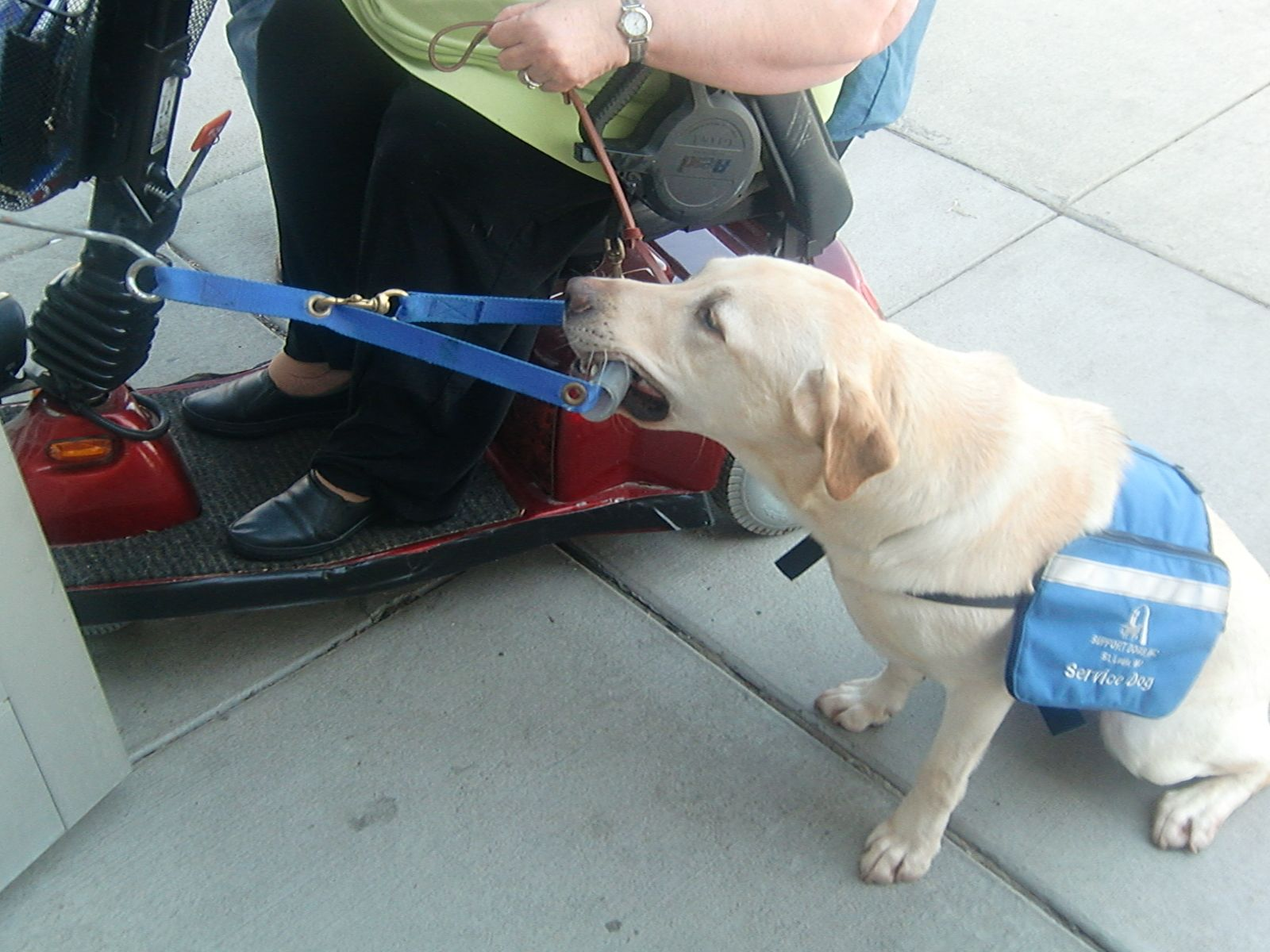 Non Profit Assistance Dog Provider And Trainer Support Dogs