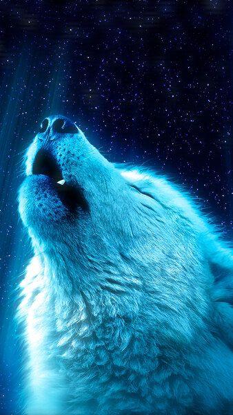 White Wolf Howling 8k Hd Mobile Smartphone And Pc Desktop Laptop Wallpaper 7680x4320 3840x2160 1920x1080 2 Wolf Wallpaper Wolf Spirit Animal Wolf Spirit