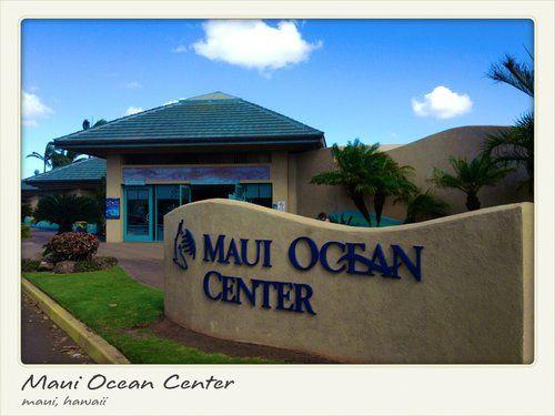 Maui Ocean Center Reviews Wailuku Hawaii Gogobot Maui Ocean Skyscanner