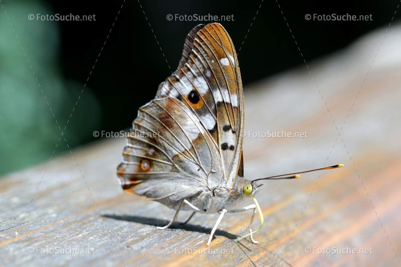 Schmetterling Insekten Russel Insekten Schmetterling Tiere