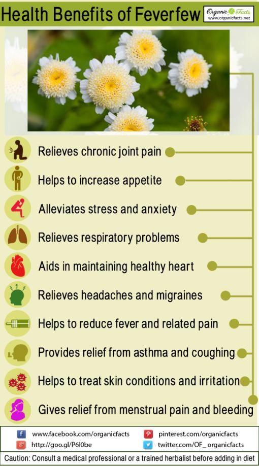 Some Of The Most Unique Health Benefits Of Feverfew Include Its Ability To Treat Headaches Relieve Stress Lo Feverfew How To Relieve Headaches Herbal Therapy