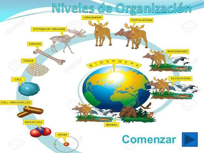 Imagen Relacionada Ensenanza Biologia Clasificacion De Seres Vivos Ensenando Ciencias