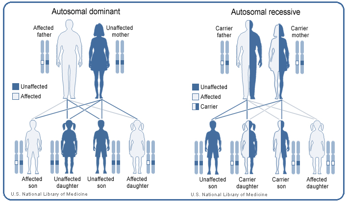The Inheritance Pattern Of Ehlers Danlos Syndrome Varies By Type