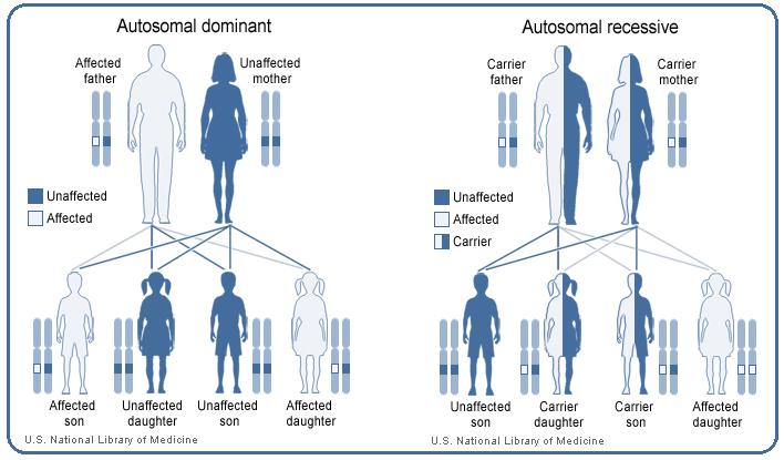 The inheritance pattern of EhlersDanlos syndrome varies
