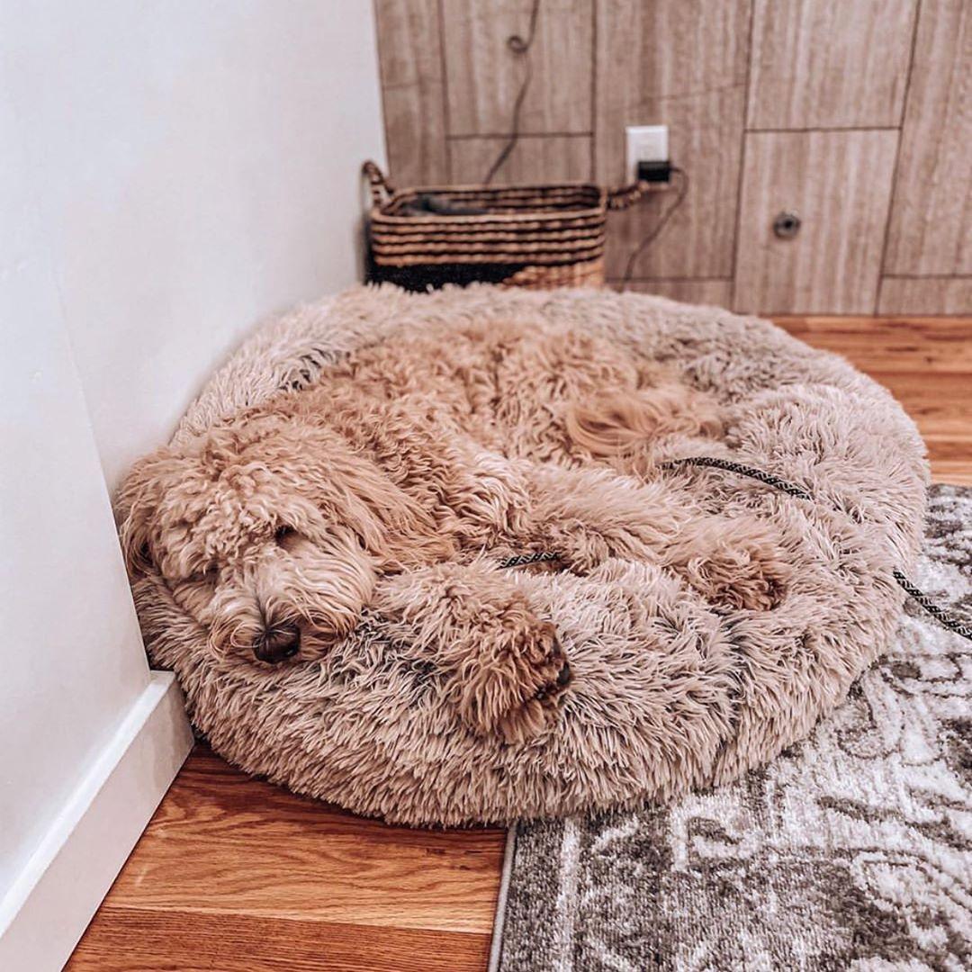 Calming dog bed Australia in 2020 Dog pet beds, Dog bed