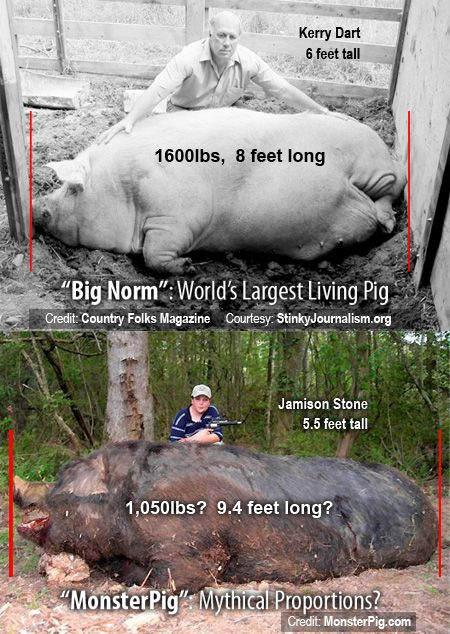 Hogzilla Monster Pig Alabama Kerry Dart Big Norm Debunks