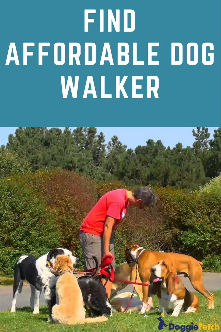 Should You Hire A Dog Walker Dog Walking Services Dogs Dog Walking