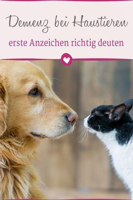 Hunde Und Katzen Werden Auch Alter Und Kampfen Mit Alterserscheinungen Haustiere Konnen Sogar An Demenz Erkranken Haustier Hund Und Katze Haustiere Haustier