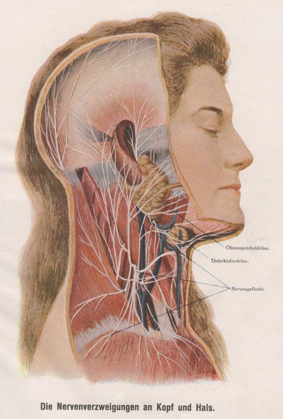 1910 Human Head Anatomy Print Nervous System Old Medical Anatomy
