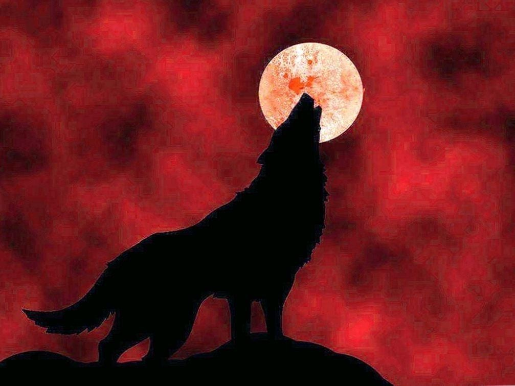 Pin On Wolf Wallpapers 1