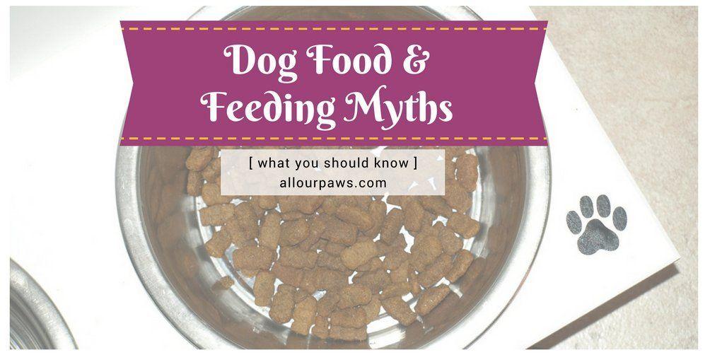 Dog food and feeding myths dog food recipes food myths
