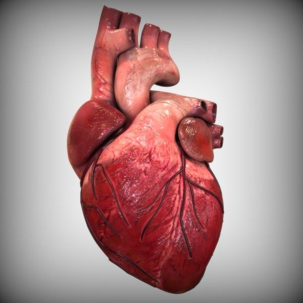 3d Model Of The Human Heart 3d Anatomy Pinterest Human Heart