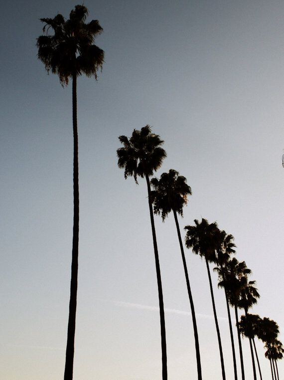 Los Angeles Photography Hollywood Palm Trees L A Photograph Print Black White With Hue Los Angeles Photography Home Decor Wall Art Los Angeles Photography California Palm Trees Los Angeles Wallpaper