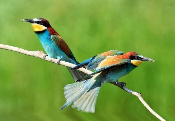7 Wonders Of The World Birds Hd Wallpaper Free Download Beautiful Birds Most Beautiful Birds Bird Photography