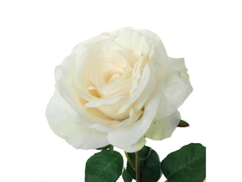 Vara de rosa de 70 cms. de color crema