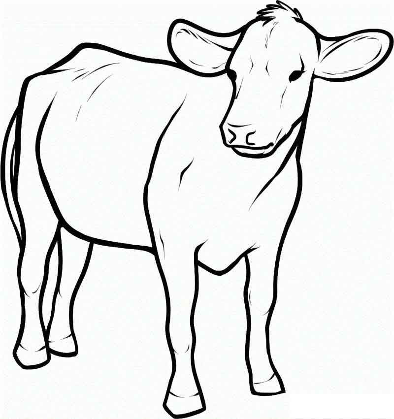 Cow Coloring Pages Printable For Kids From Animals Coloring Pages