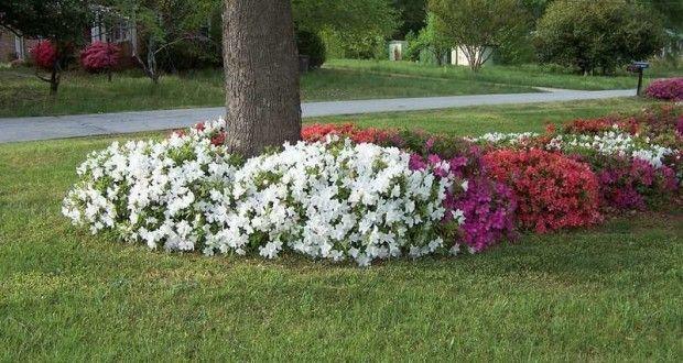 flores puedo plantar debajo de los árboles