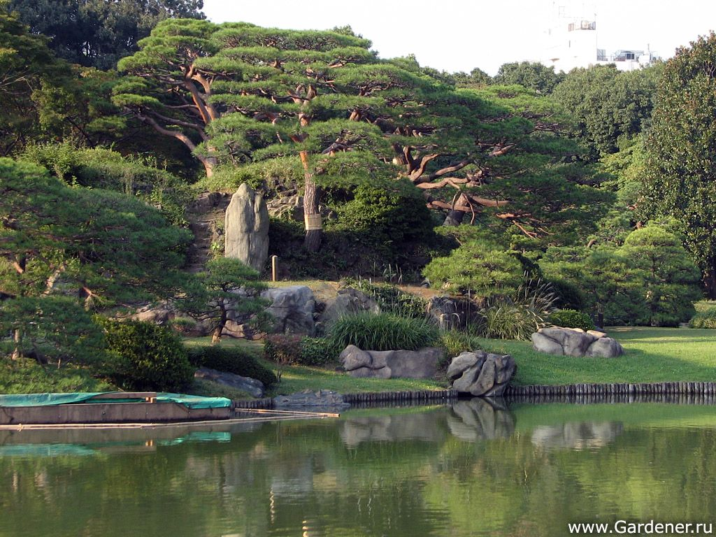 Rikugien Gardens (Сад Рикугиэн)   Ландшафтный дизайн садов и парков