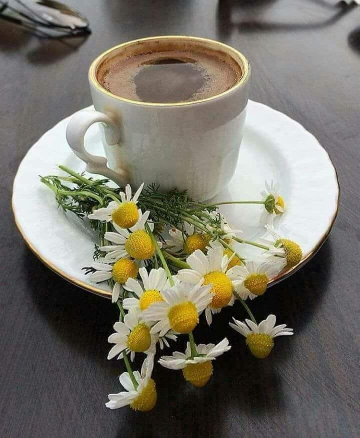 Февраля открытка, картинки кофе с ромашками