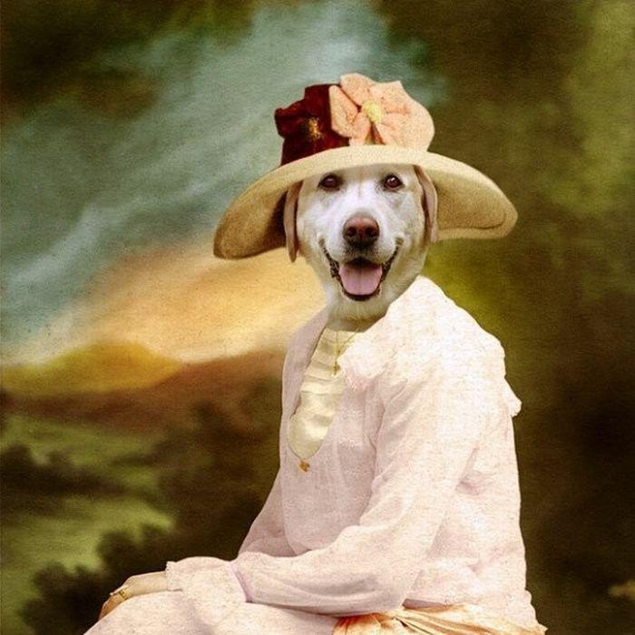 онлайн странные картинки с собаками поэтому
